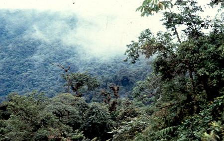 otonga_forest